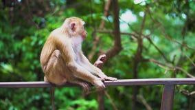 Un mono salvaje se sienta en la verja en el parque hábitats naturales Un bosque tropical almacen de metraje de vídeo