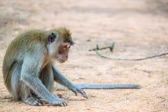 Un mono se sienta en la tierra Fotografía de archivo