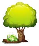 Un monstre aux yeux de trois vert dormant solidement sous l'arbre Photos stock
