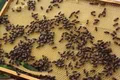 Un montón de abejas detrás del trabajo Fotografía de archivo libre de regalías