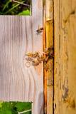 Un montón de abejas en la entrada de la colmena en colmenar Fotos de archivo