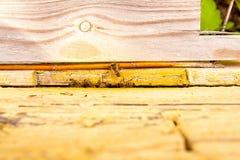 Un montón de abejas en la entrada de la colmena en colmenar Foto de archivo
