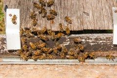 Un montón de abejas en la entrada de la colmena en colmenar Imagenes de archivo