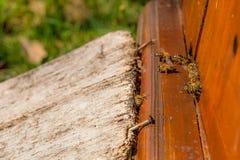 Un montón de abejas en la entrada de la colmena en colmenar Imagen de archivo