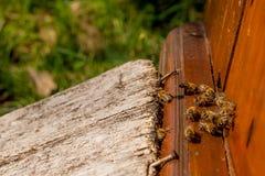 Un montón de abejas en la entrada de la colmena en colmenar Foto de archivo libre de regalías