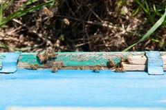 Un montón de abejas en la entrada de la colmena en colmenar Imagen de archivo libre de regalías