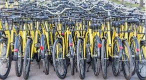 Un montón de bicis amarillas Fotos de archivo libres de regalías