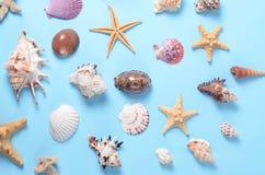 Un montón de diversas conchas marinas en un fondo azul Contexto temático de la playa para la publicidad de la plantilla de la age Imagenes de archivo