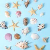 Un montón de diversas conchas marinas en un fondo azul Contexto temático de la playa para la publicidad de la plantilla de la age Foto de archivo