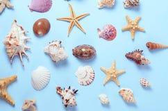 Un montón de diversas conchas marinas en un fondo azul Contexto temático de la playa para la publicidad de la plantilla de la age Fotografía de archivo