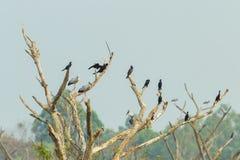Un montón de pájaro del comedor de los pescados Foto de archivo libre de regalías