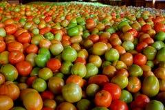 Un montón de tomates Imágenes de archivo libres de regalías