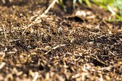 Un montón grande de las termitas, termitas come árboles putrefactos fotografía de archivo