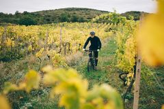 Un montar a caballo del ciclista en el viñedo Fotos de archivo