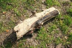 Un morceau de branche sèche laissé tomber à la terre photographie stock libre de droits