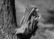 Un morceau en bois cassé Photographie stock libre de droits