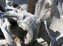 Un morceau tordu ensoleillé de bois de flottage âgé Photographie stock libre de droits