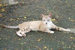 Un moreno precioso y un gato perdido blanco, ganduleando en la calle, en un parque verde enorme fotografía de archivo libre de regalías
