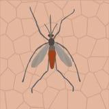 Un mosquito en piel humana Imagen de archivo libre de regalías