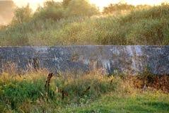 Un moucheron près de la rivière photos stock