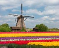 Un moulin à vent néerlandais au-dessus des tulipes Photos libres de droits