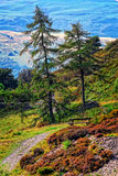 Un Mountain View Imagen de archivo libre de regalías