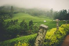 Un Mountain View de niebla con greenary hermoso Foto de archivo libre de regalías
