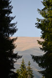 Un Mountain View de un prado alpino visto a través de las ramas de coníferas en un día hermoso de verano con el cielo claro Fotografía de archivo libre de regalías