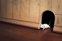 Un mouse che lo esce è foro Fotografia Stock