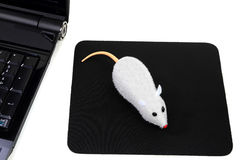 Un mouse senza fili dei due tasti, maschera divertente del calcolatore Immagini Stock