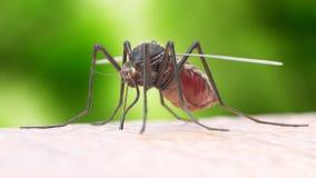 Un moustique illustration stock