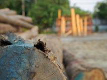 Un mucchio degli alberi tagliati del tek nel legno per un fondo Immagini Stock Libere da Diritti