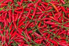 Un mucchio dei peperoncini rossi Immagine Stock Libera da Diritti