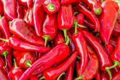 Un mucchio dei peperoncini rossi rossi lunghi al mercato delle verdure Fotografia Stock Libera da Diritti