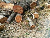 Un mucchio dei tronchi abbattuti di vecchi alberi fotografie stock