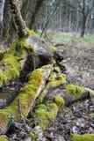 Un mucchio dei tronchi di albero immagine stock