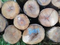 Un mucchio dei tronchi segati nella foresta fotografia stock