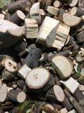 Un mucchio del fondo tagliato dei tronchi di albero fotografie stock