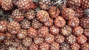 Un mucchio dell'ananas insieme Immagine Stock Libera da Diritti