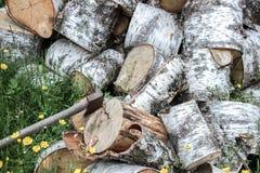 Un mucchio della legna da ardere della betulla Immagine Stock