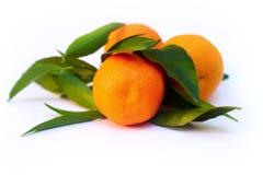 Un mucchio delle filiali del mandarino Fotografia Stock