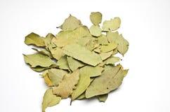 Un mucchio delle foglie di alloro Immagine Stock