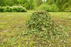 Un mucchio di erba tagliata Fotografie Stock Libere da Diritti