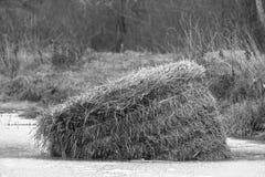 Un mucchio di fieno è caduto nel lago e si è congelato Il mucchio di fieno nell'acqua Arte-oggetto Monohrom immagini stock libere da diritti