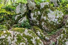 Un mucchio di grandi pietre nella foresta, invaso con muschio ed erba fotografia stock libera da diritti