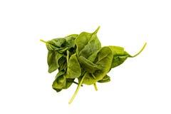 Un mucchio di spinaci su fondo bianco Fotografia Stock Libera da Diritti