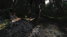 Un muchacha-fotógrafo sano activo del inconformista con una cámara en sus manos camina con la vista posterior del bosque de camin almacen de metraje de vídeo