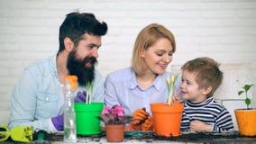 Un muchacho alegre ayuda a padres a plantar las flores en potes coloreados Verano que planta las flores metrajes