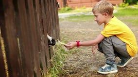 Un muchacho alimenta la cabra con el heno en la granja almacen de metraje de vídeo