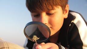 Un muchacho caucásico examina una planta a través de una lupa almacen de metraje de vídeo